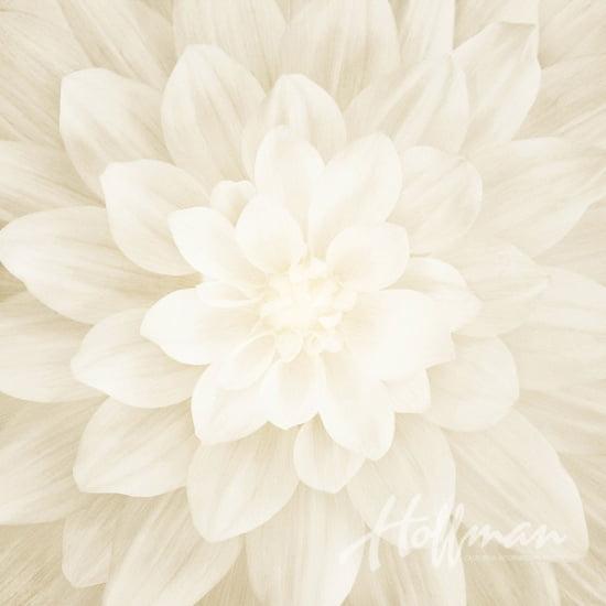 Painel Dream Big Hoffman Fabric- Ivory